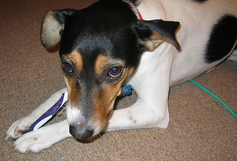 Xylitol Becoming More Common | Dogs | Scoop.it