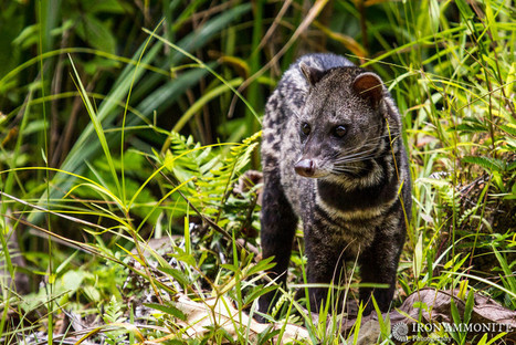 """""""My photo used to help raise awareness of the ethics behind Civet Cat coffee."""" Paul Williams. 