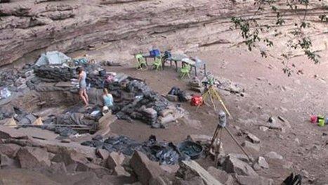 Des matelas anti-insectes il y a 77 000 ans | Aux origines | Scoop.it