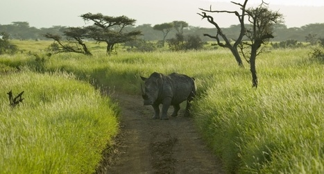 Only 3 northern white #rhinos left on Earth #extinction | Messenger for mother Earth | Scoop.it
