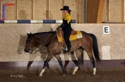 Showing American Quarter Horses Abroad | Horse Sense | Scoop.it
