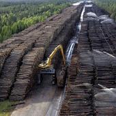 The World's Largest Wood Stockpile Is Absolutely Insane | Strange days indeed... | Scoop.it