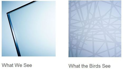 Windows Inspired by Spider Webs | Design Arena | Scoop.it
