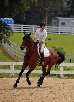 4 Exercises to Increase Rider Fitness and Horse Comfort | EQUINE SCIENCE | Scoop.it