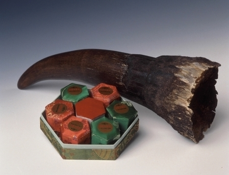 The trouble with using synthetic rhino horn to stop poaching | What's Happening to Africa's Rhino? | Scoop.it