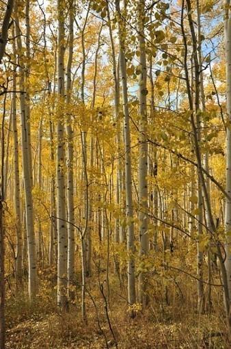 L'Observatoire de la Biodiversité des Forêts vous envoie en mission ! | Sciences participatives, pratiques collaboratives | Scoop.it