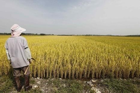 South Korea Plans Tariff of Over 500% on Rice Imports | IB Economics | Scoop.it
