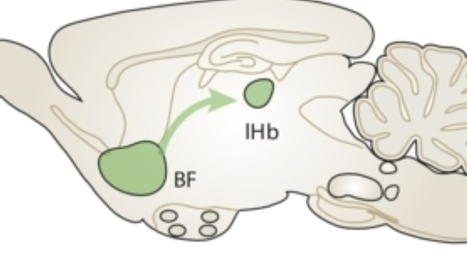 Animal Study Finds a Brain Circuit That Spurs Bullying | MindBrainBody | Scoop.it