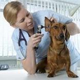 Identifying Vet-worthy Dog Health Problems | Pedegru | Animals Make Life Better | Scoop.it