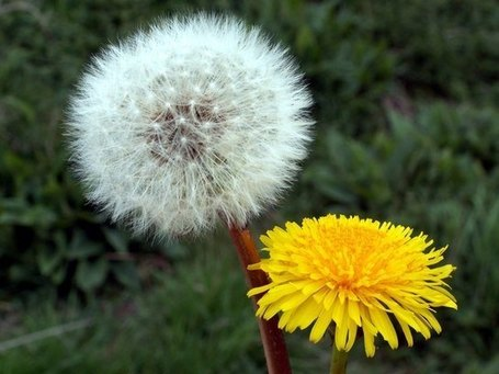 """It's a Dandelion Thing:"" Social Media and Marketing 