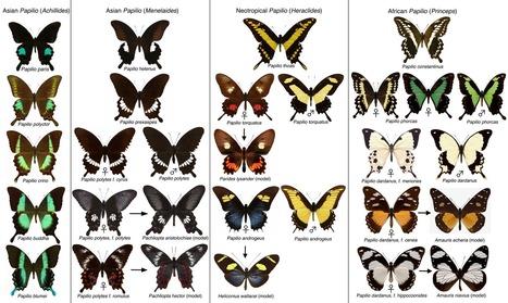 Bêtes de sexe (2) : et si on prenait le problème à l'envers ? | EntomoScience | Scoop.it