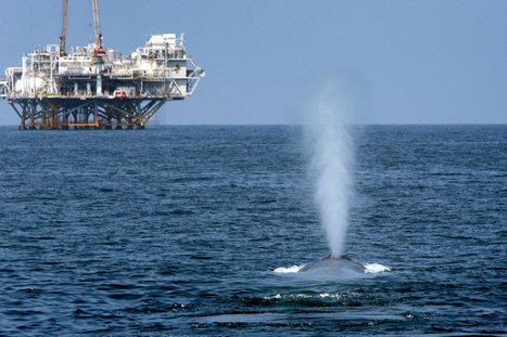 Project Seeks to Map and Reduce Ocean Noise Pollution | Sustainable Futures | Scoop.it