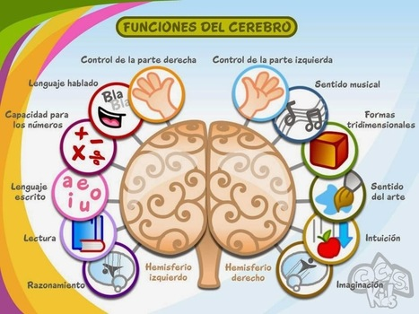 Medio cerebro | Orientación Educativa - Enlaces para mi P.L.E. | Scoop.it