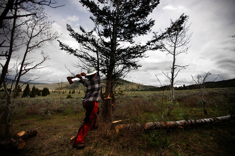 Fighting Fire With Fire: Why Some Burns Are Good For Nature   Geographical Processes   Scoop.it