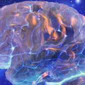 Rifacciamo il cervello - Wired.it   Neuroscienze   Scoop.it