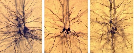 Reshaping the brain: scientists reprogram neurons after birth | Neurobiology | Scoop.it