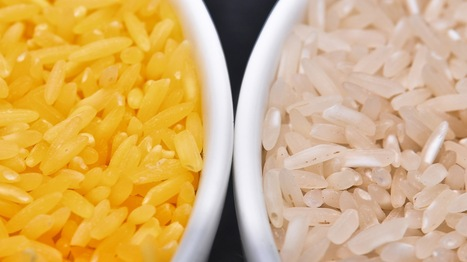 Rice is the new cocaine for European drug dealers | Annie Haven | Haven Brand | Scoop.it