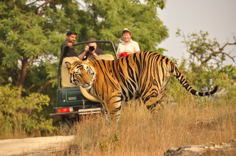 Top 5 Jungles In India To Enjoy A Safari | The Global Traveller | Scoop.it