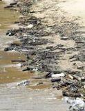 Accumulating 'microplastic' threat to shores - Go Green - SustainLane | Sustainable Futures | Scoop.it