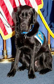 Bunny's Blog: Staten Island District Attorney Hires Therapy Dog | Pet News | Scoop.it