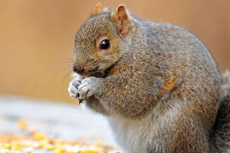 Squirrels go nuts for First Lady's garden inshutdown | Troy West's Radio Show Prep | Scoop.it