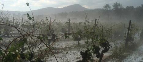 Vignoble du Languedoc, la grêle ravage la zone du Pic-Saint-Loup! | Le vin quotidien | Scoop.it