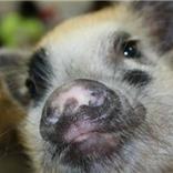 Using enrichment to modify behavior | Pedegru | Animals Make Life Better | Scoop.it