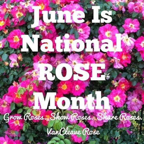 June is National Rose Month | All Things Rose | Scoop.it