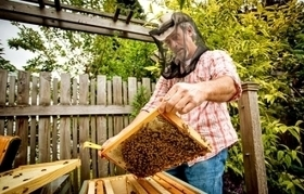 Urban Bees For Hire | A Sense of the Ridiculous | Scoop.it