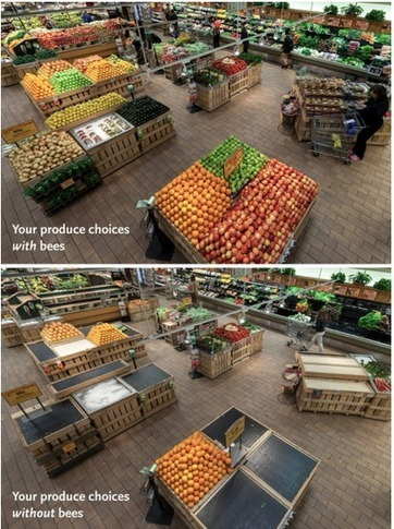 This is what your supermarket would look like if all the bees died off - Cool Australia | SUSTAINABILITY | Scoop.it