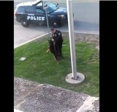 Police officer placed on leave after abusive behavior to K9 is caught on video | Nature Animals humankind | Scoop.it