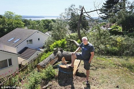 Wealthy homeowner fined £125,000 after felling neighbour's tree that blocked sea views from his hot tub | News and Current Affairs | Scoop.it