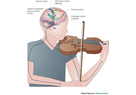 The Surprising Science Behind What Music Does To Our Brains | BrainLovers | Scoop.it