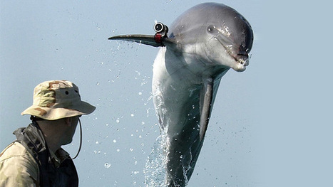 US Navy to deploy combat dolphins for Black Sea military drills ... | los animales | Scoop.it