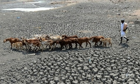 #India warns 330 million people suffering from #drought | Sustain Our Earth | Scoop.it