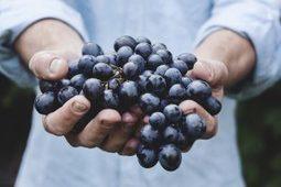 Duurzaam eten – NutriHack | Foodservice | Scoop.it