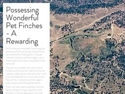 Possessing Wonderful Pet Finches - A Rewarding | The Finch Farm | Scoop.it