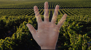 The Question of Land-Focused vs. Hand-Focused Wines - Fermentation | Southern California Wine and Craft Spirits Journal | Scoop.it