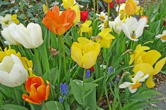 Recevoir des fleurs fait toujours plaisir...   The Blog's Revue by OlivierSC   Scoop.it