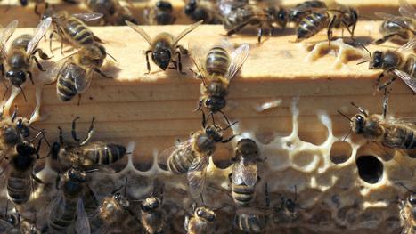 Les pesticides tueurs d'abeilles de plus en plus utilisés en France: « C'est alarmant »   Biodiversité   Scoop.it