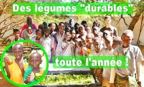 Sénégal : Consommer des légumes toute l'année dans le respect de l'environnement :  comment ? pourquoi ? | Confidences Canopéennes | Scoop.it