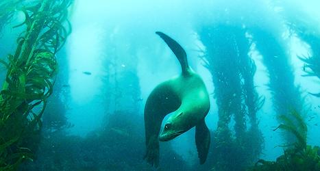 Isla Natividad, Baja Mexico   Nautilus At Sea   The Joy of Mexico   Scoop.it