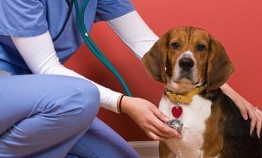 5 Signs Why Your Pet Might Need a Vet | Why Your Pet Might Need a Vet | Scoop.it