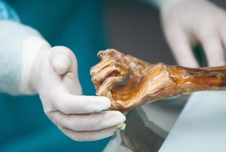The Iceman's Stomach Bugs Offer Clues to Ancient Human Migration | Science and Global Education Trends | Scoop.it