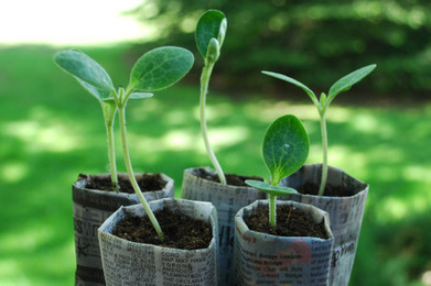 Grow A Seedling – DIY | School Stuff | Scoop.it