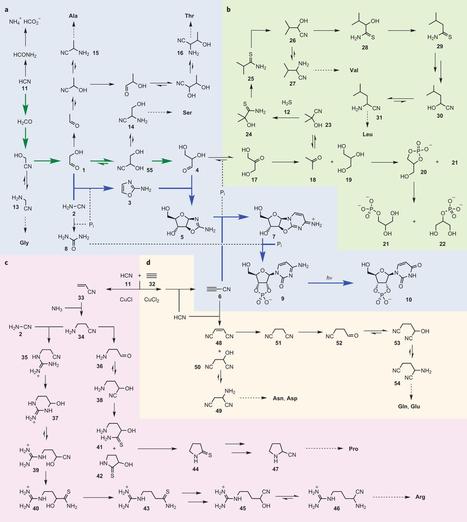 Un origen químico de la vida elegantemente simple | #próxima | Cuaderno de Cultura Científica | Biología de Cosas de Ciencias | Scoop.it