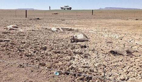 'We're Going to Be Out of Water': Navajo Nation Dying of Thirst - Indian Country Today Media Network | Planet Earth | Scoop.it