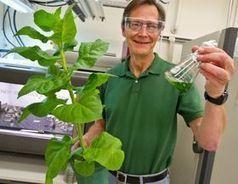 Le laboratoire de Berkeley LBNL optimise la dégradation de la cellulose pour la production de biocarburants | Veille Scientifique Agroalimentaire - Agronomie | Scoop.it