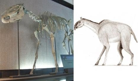 Develan la historia evolutiva de los caballos y sus parientes - Jujuy al Momento | Caballo, Caballos | Scoop.it
