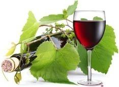 Villa Favorita 2014. La più grande degustazione europea di vini naturali | Vinitours | Scoop.it